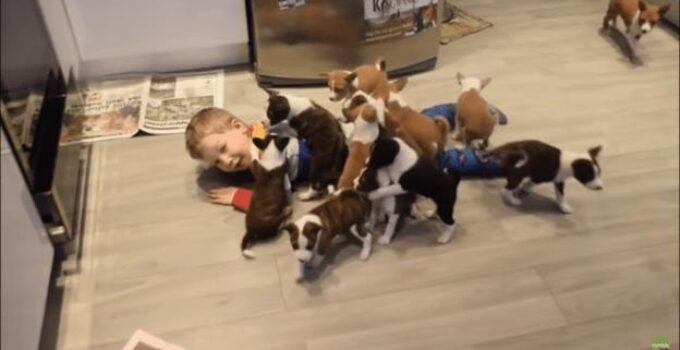 basenji puppies and human kid