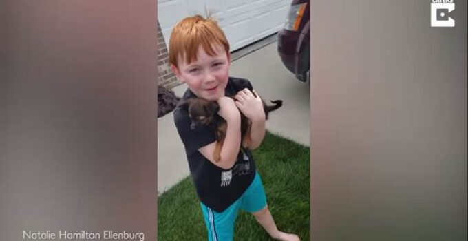little boy saved up for a puppy